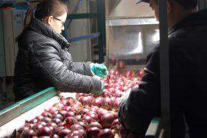 Franje Onions | Waarde